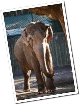 949817_elephant
