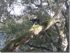 Bella in the tree 003