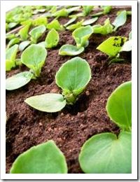 815947_seedling