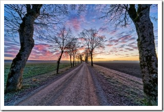 1406911_dirt_road_with_maple_trees_in_winter_sunrise
