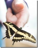 1417838_butterfly