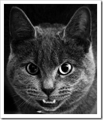 1031891_angry_kitty