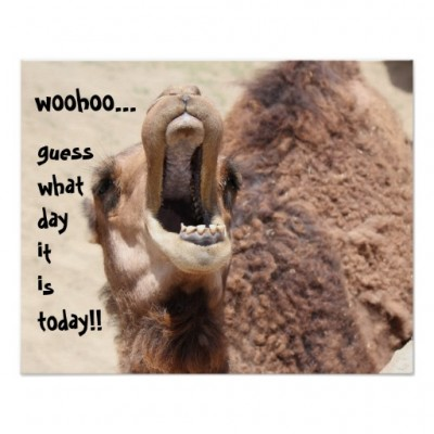 funny_camel_hump_day_guess_what_day_it_is_poster-r02dd45d94a7c446a93647d86a946bbd3_zxf_8byvr_512