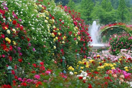 beautiful-rose-garden-wallpaper-ghmcc1zz